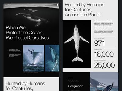 Ocean Alliance layout minimal design typography ocean website branding whales clean web design ui