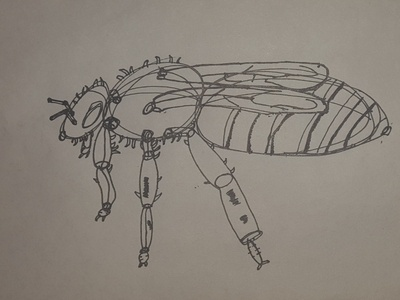 Apis mellifera  Western honey bee