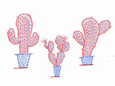 Cacti Study hot house plants cactus cacti
