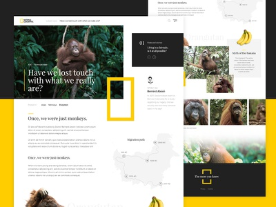 National Geographic article exploration ng apes article wildlife orangutan monkey national geographic