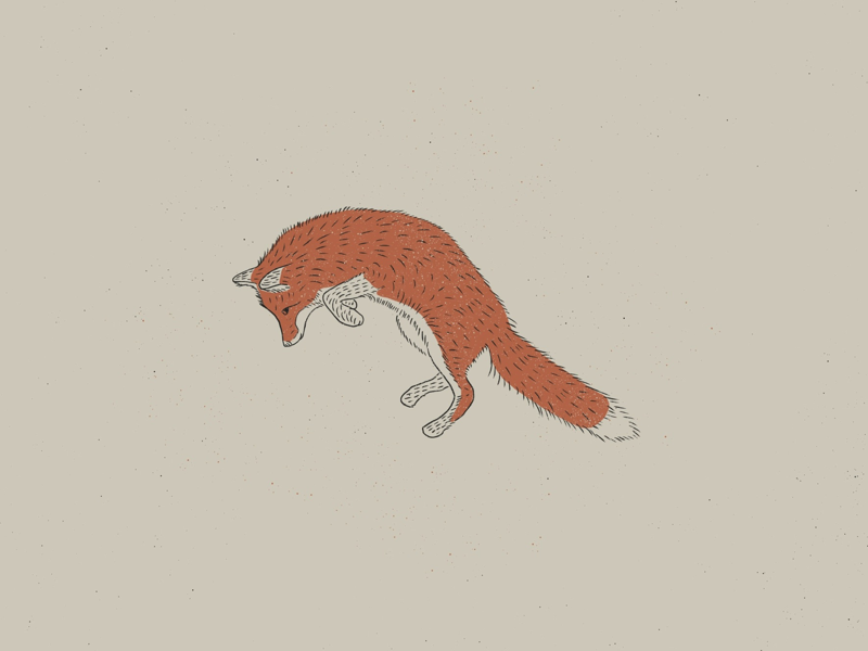 Leaping Fox Illustration comfort colors neutral colors earth earth tones fox graphic design graphic fox illustration illustration jump leap leaping fox