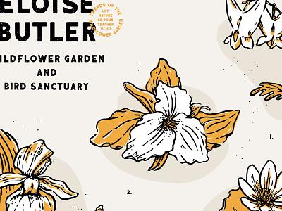 Posters for Parks postersforparks flora native minnesota eloisebutler wildflowers