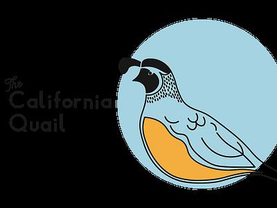 California Quail simple state birds california california quail art lettering illustrator flat minimal vector typography design illustration