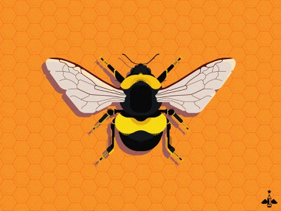 Daily Doodle Exercise - Honey Bee insect bright adobe illustrator flat design product design vector art contrasting details honey bee bee black orange yellow contrast vector illustrator vector daily vector daily doodle daily illustration daily art