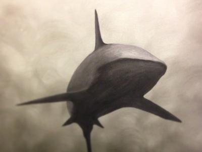 Shark Painting shark oil painting