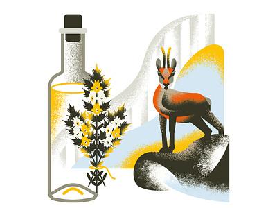 Sideritis hyssopifolia & herbal liqueur illustration