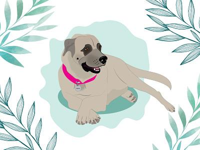 Haya dog illustration dog wacom intuos design illustration