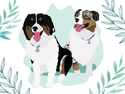 Bowie & Maui - Aussie Shepherds dog illustration dog wacom intuos design illustration
