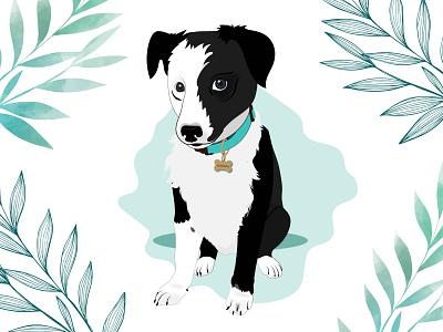 Panceta the Border Collie puppy dog dog illustration wacom intuos design illustration