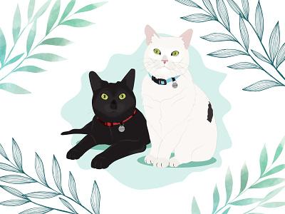 Clementine & Walter white cat black cat kitten cat illustration cat wacom intuos design illustration