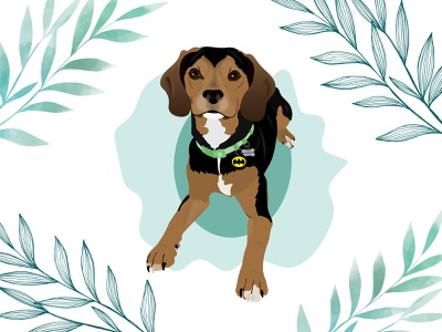 Murphy the Beaglier cavalier beagle beaglier dog dog illustration wacom intuos design illustration
