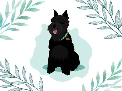 Maggie the Mini Schnauzer schnauzer minischnauzer dog dog illustration wacom intuos design illustration