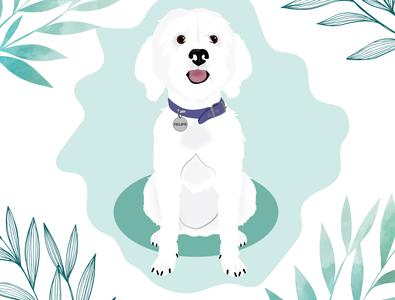 Felipe the Poodle