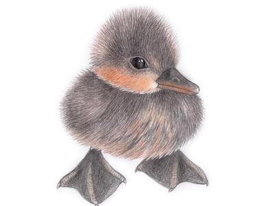 Ugly duckling - little swan