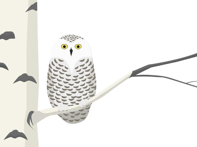 Snowy Owl Illustration owl illustration sketch bird winter snowy snowy owl