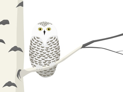 Snowy Owl Illustration owl illustration sketch bird winter snowy snowy owl