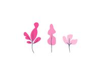 Plants 🌵