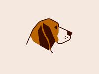 Beagle #1 Revision