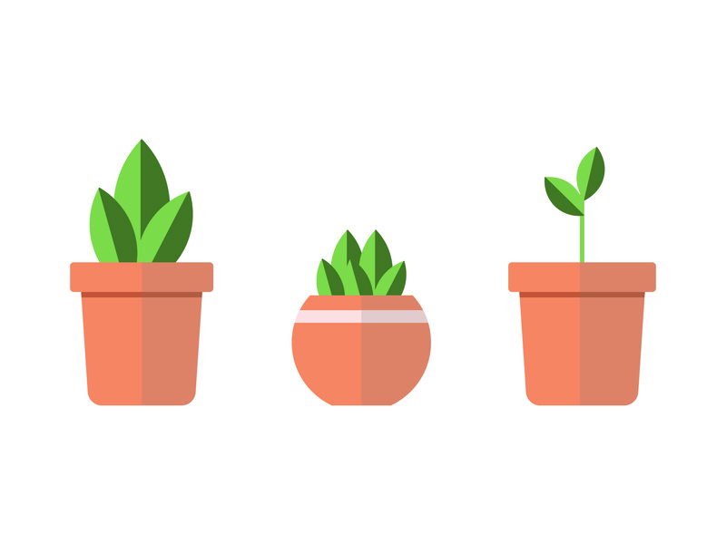 Potted Plants 01