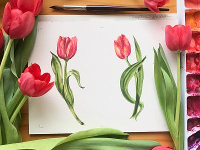 Danza Tulipani watercolor tulips illustration flowers floral