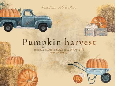 Pumpkin harvest illustration set