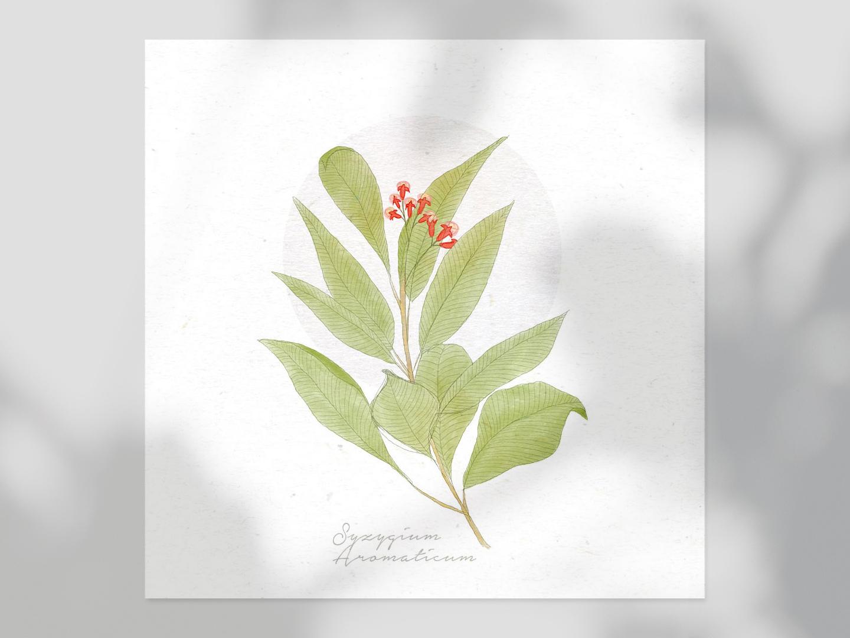 Syzygium Aromaticum flower drawing drawing digital painting plant syzygium nature feminine delicate flowers illustration flower illustration floral flower