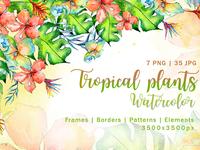 Tropical Plant PNG Watercolor Set Illustration