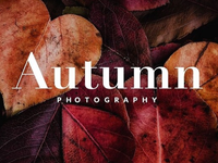 Free Autumn Lightroom Preset