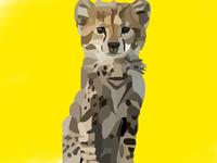 The Newborn Cheetah