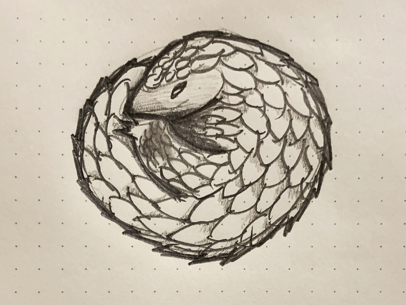 Pangolin sketch pencil drawing sketch illustration animals africa pangolin