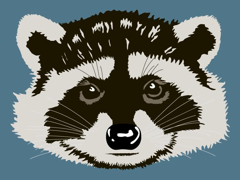 Raccoon Head - WIP vector illustrator illustration raccoon wildlife animal