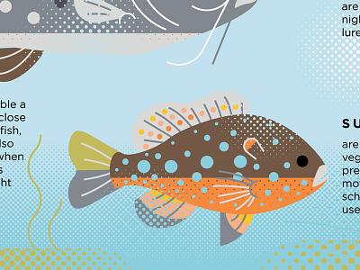 Sunfish water nature sign nature sunfish fish illustration fish icon design icon illustration