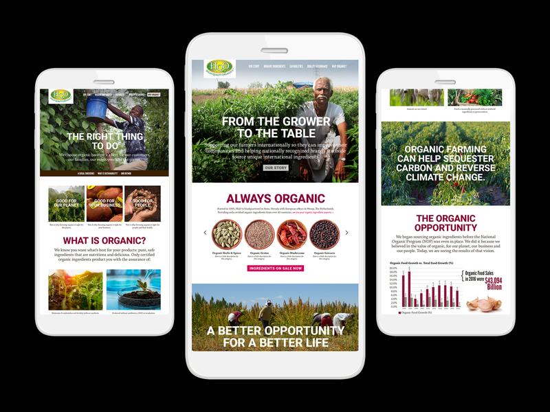 HQO Website Concepts web design design branding uxdesign ux ui design ui