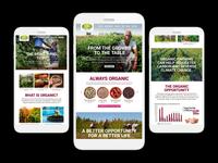 HQO Website Concepts