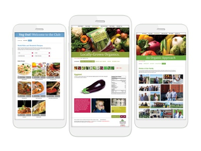 Nevada Fresh Pak Website web designer web developement design company web design uxdesign ux ui design ui branding design
