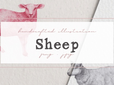 Hand drawn Sheeps Illustrations sheep clipart clipart nantiaco graphics sheep illustration