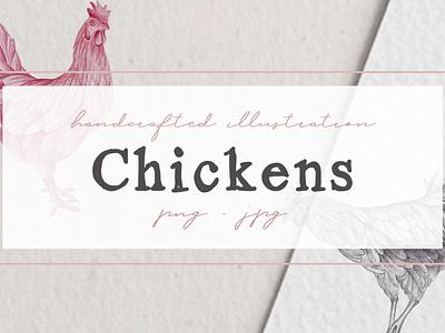 Hand drawn Chicken Illustrations graphic design resources chicken artwork chicken drawing chicken clipart nantiaco graphics illustration