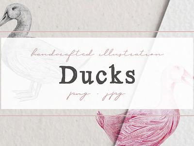 Hand drawn Ducks Illustrations animal illustration ducks artwork ducks cliparts animal farm cliparts nantiaco graphics illustration