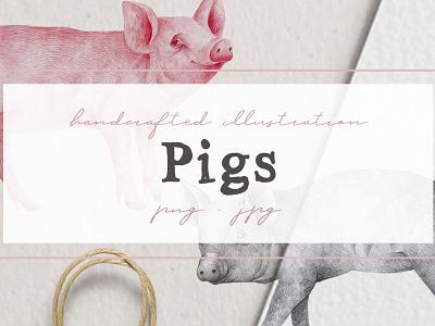 Hand drawn Pigs Illustrations piglets pig clipart illustration nantiaco graphics