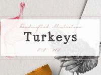 Hand drawn Turkeys Illustrations