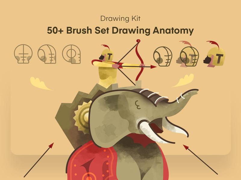 Brush Set Anatomy anatomy crafting creation animation illustration procreate brush