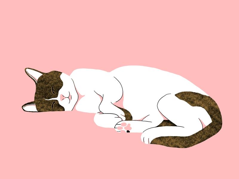 My cat cat drawing illustration procreate