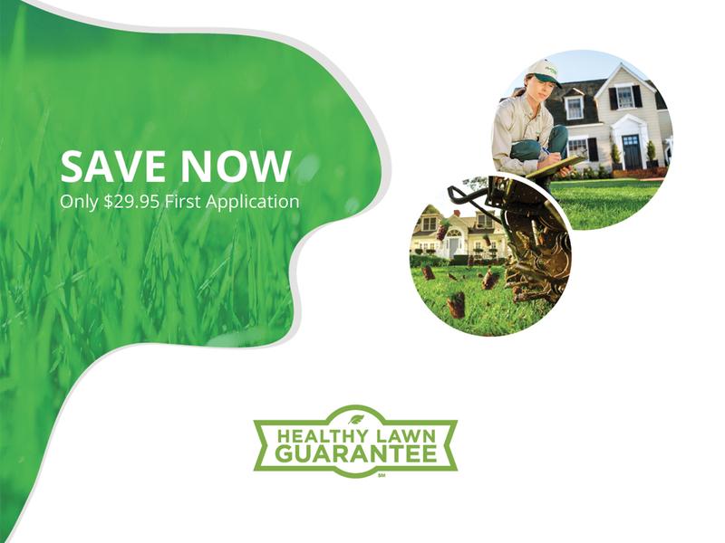 Healthy Lawn Guarantee web creative design landing page webpage website landing landingpage site illustration typography concept branding