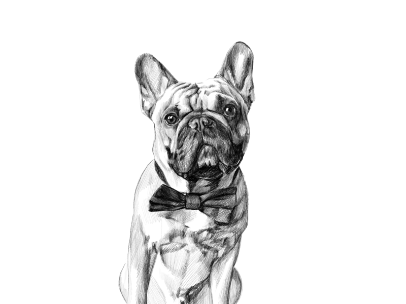 French Bulldog By Victoria Nell On Dribbble