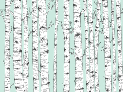 Birch Tree Vector