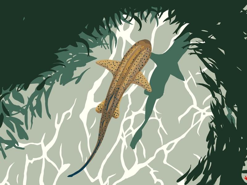 Shark wild wildlife art shark nature art blue artwork illustration