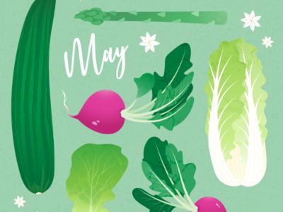 May seasonal veggies sustainability seasonal food adobe illustrator digital illustration vector illustration