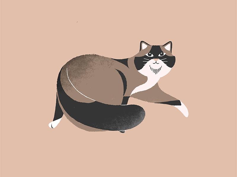 Fat Cat illustration fat cat