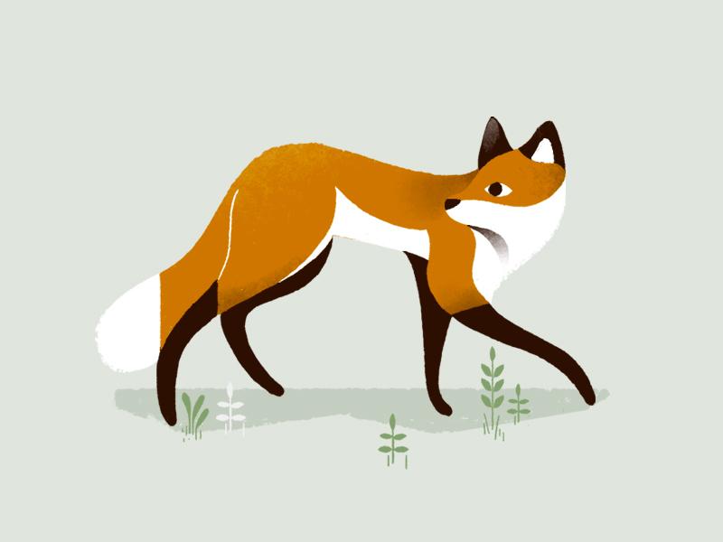 Sneaky fox foxy wood illustration fox