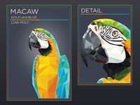 Macaw - Gold and Blue